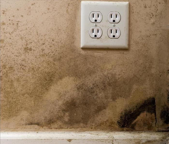 Mold Remediation Mold Damage Remediation Services You Can Trust As A Resident Of Trooper