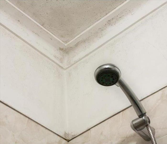 Mold Remediation A Lack of Proper Ventilation Inside of Your Evansburg Bathroom Can Cause Mold Damage